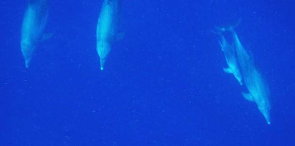 Zanzibar dolphin tour