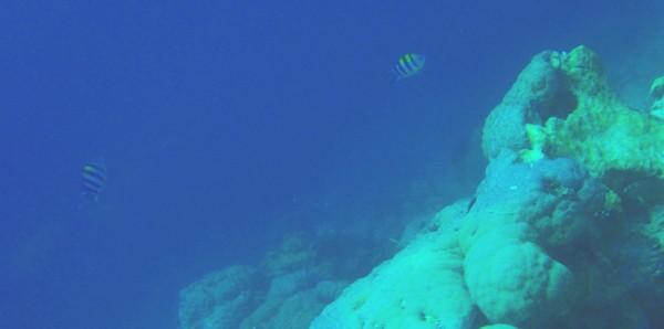 Pemba Misali Island snorkeling
